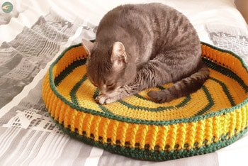 Two-Tone Cat Bed